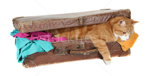 snoopy tomcat in old suitcase with clothes Stock photo © pterwort