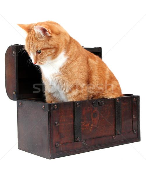 inquisitive tomcat in chest Stock photo © pterwort
