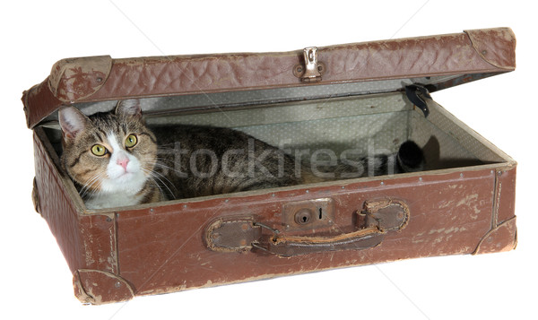 snoopy pet in antiquarian case Stock photo © pterwort
