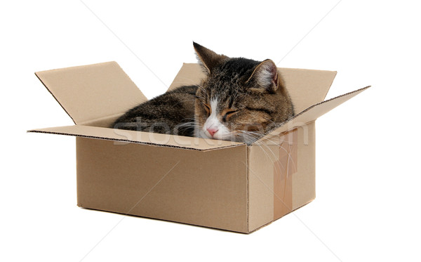 cute cat in removal box Stock photo © pterwort