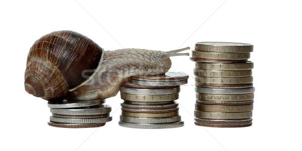 улитки монетами дома аннотация природы Сток-фото © pterwort