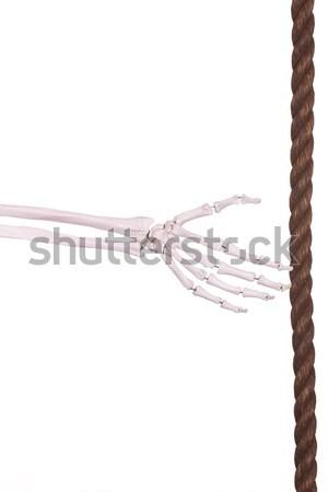 count 3- hand of bones Stock photo © pterwort