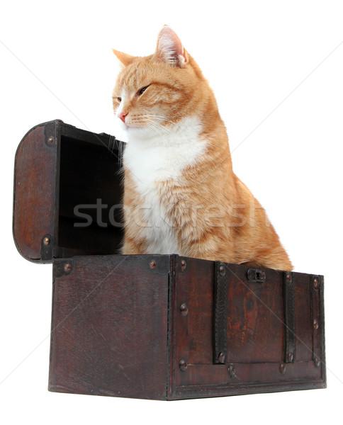 chilling tomcat in treasure chest Stock photo © pterwort