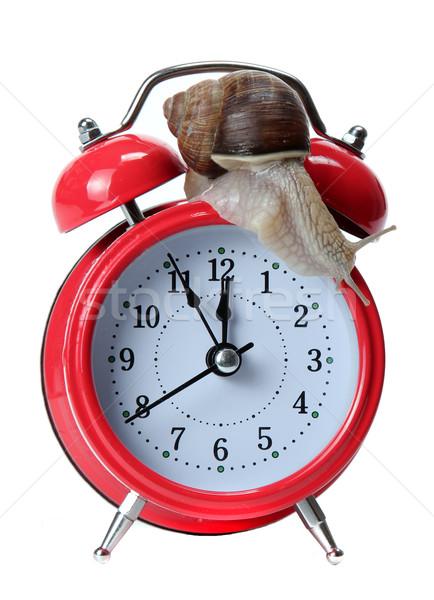 Vermelho caracol relógio tempo dormir ver Foto stock © pterwort