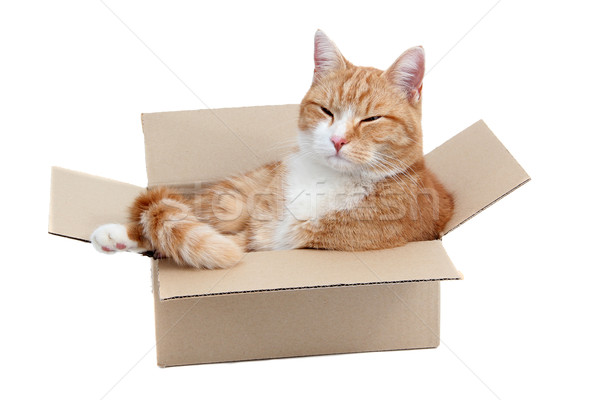 relaxing cute tomcat in box Stock photo © pterwort