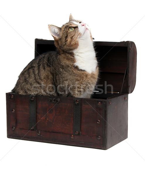 inquisitive cat in treasure chest Stock photo © pterwort