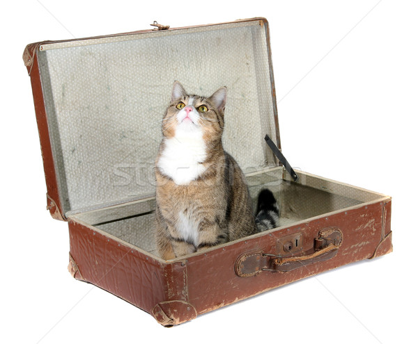 Weinig kat oude koffer witte zomer Stockfoto © pterwort