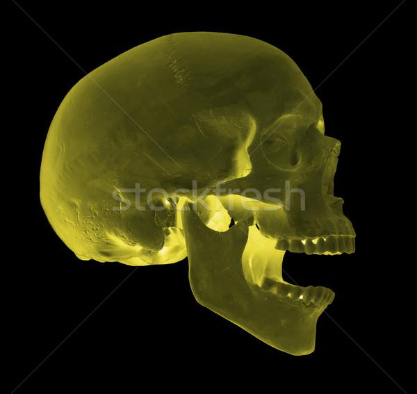 Ijesztő sikít citromsárga koponya orvosi egészség Stock fotó © pterwort