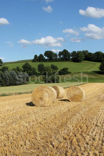 Bála szalmaszál kicsi domb étel fű Stock fotó © pterwort