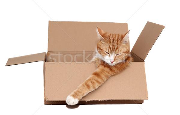 Alszik aranyos eltávolítás doboz papír macska Stock fotó © pterwort