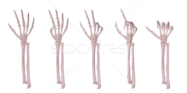 skeleton hands counting 1-5 Stock photo © pterwort