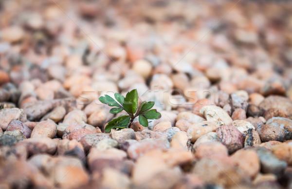 Plant bruin home tuin voorjaar Stockfoto © punsayaporn