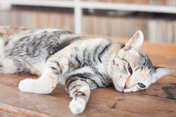 Stock photo: Siamese cat lying on wooden table