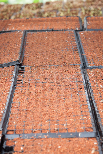 Checkered soil prepare for cultivation Stock photo © punsayaporn