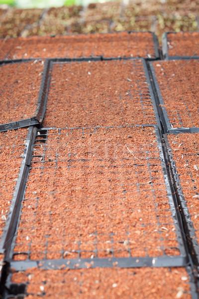 почвы складе фото области подсолнечника Сток-фото © punsayaporn