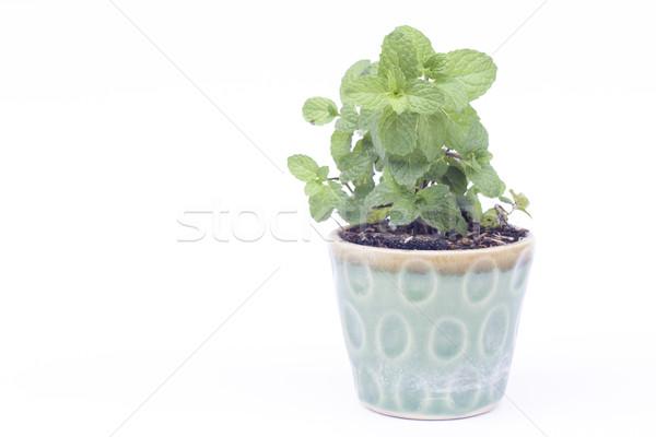 Verde planta pote isolado branco estoque Foto stock © punsayaporn