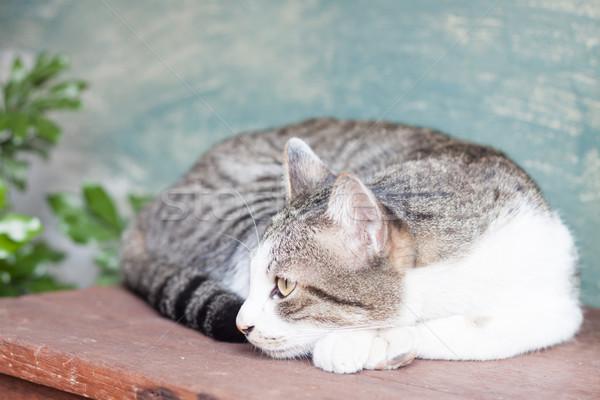 сиамские кошки деревянный стол складе фото красивой Cute Сток-фото © punsayaporn