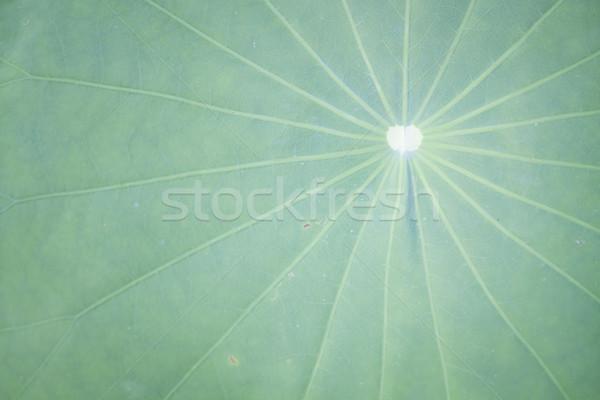 Close up lotus leaf Stock photo © punsayaporn