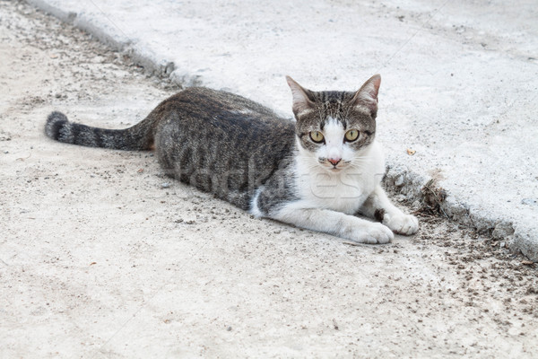 Cat laying on side looking with interest Stock photo © punsayaporn