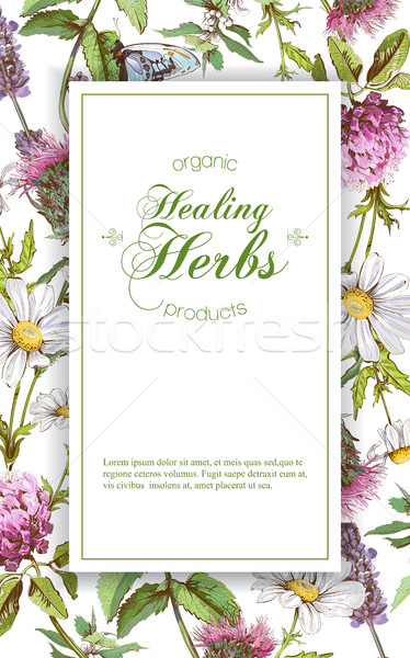 Vector herbal banner Stock photo © PurpleBird