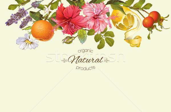Vector vintage banner Stock photo © PurpleBird
