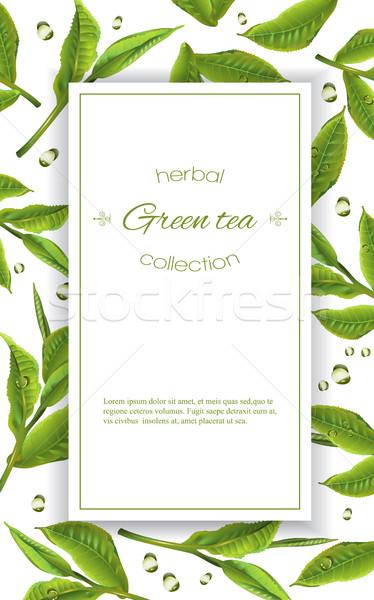 Grüntee Banner Vektor Tee Blätter Tropfen Stock foto © PurpleBird