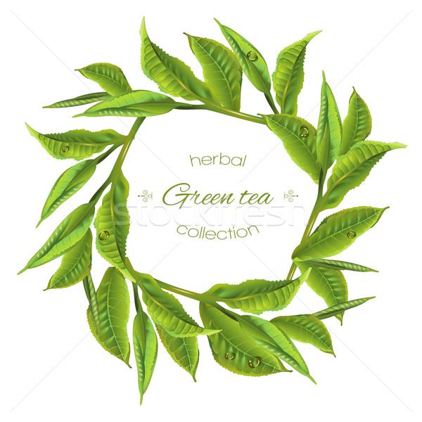 Groene thee krans vector bladeren witte ontwerp Stockfoto © PurpleBird
