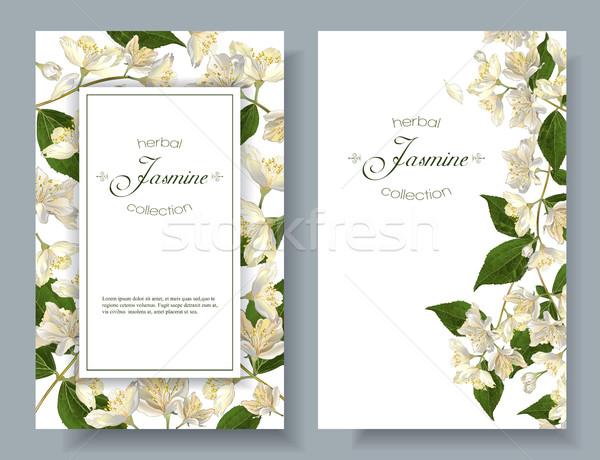 Jasmine flowers banners Stock photo © PurpleBird