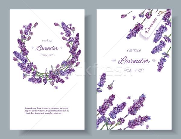 Lavender flowers banners Stock photo © PurpleBird