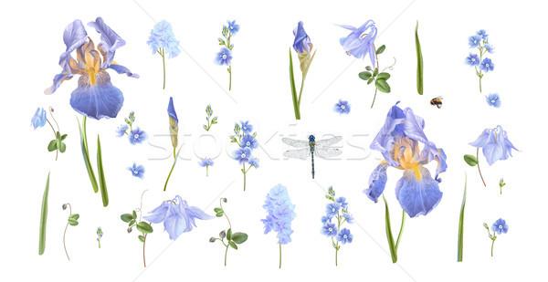 синий цветок набор вектора синий цветы Сток-фото © PurpleBird