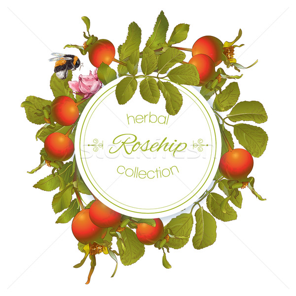 Rose hip round banner Stock photo © PurpleBird