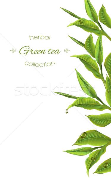 Té verde banner vector té hojas gotas Foto stock © PurpleBird
