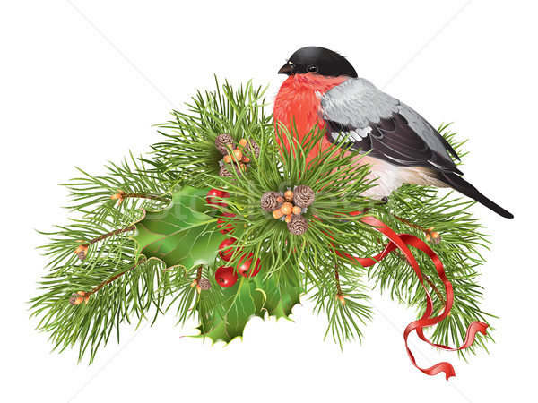 Christmas bullfinch composition Stock photo © PurpleBird
