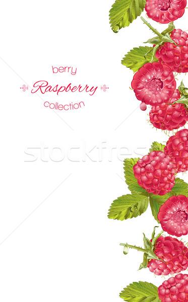 Maliny pionowy banner wektora projektu słodycze Zdjęcia stock © PurpleBird