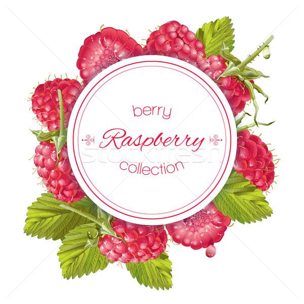 Raspberry round banner Stock photo © PurpleBird