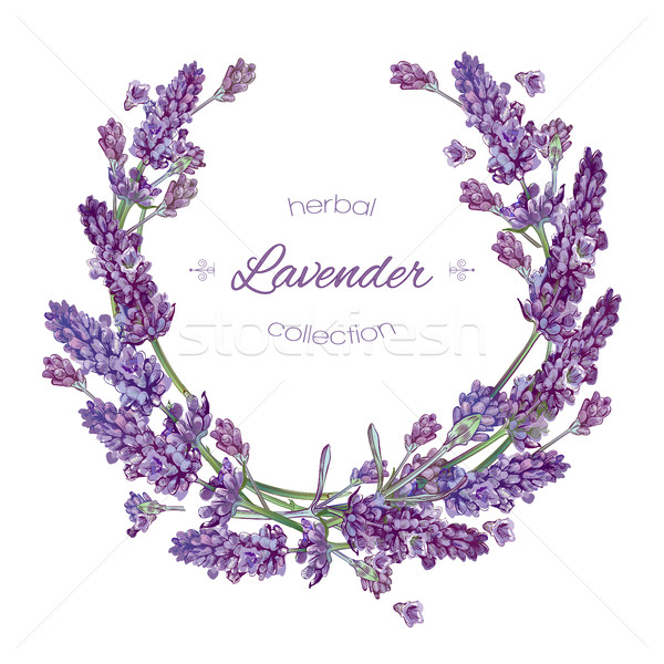 Lavande fleurs couronne vecteur blanche design Photo stock © PurpleBird