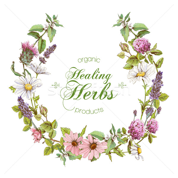 Vector herbal wreath Stock photo © PurpleBird