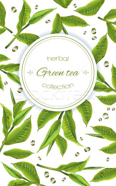 Zöld tea szalag vektor tea levelek cseppek Stock fotó © PurpleBird