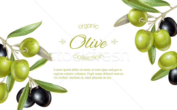Olive horizontal banner Stock photo © PurpleBird