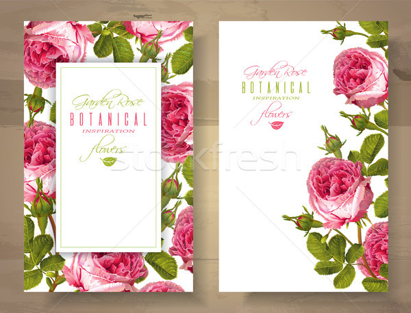 Rose vertical banners Stock photo © PurpleBird