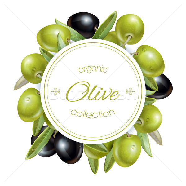 Olive round banner Stock photo © PurpleBird