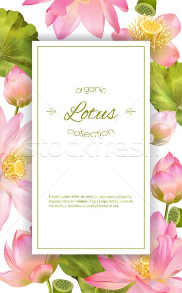 Stock photo: Lotus flower banner
