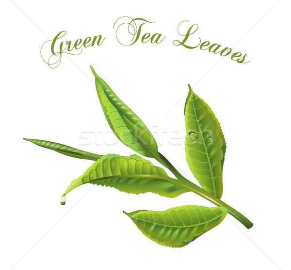 Сток-фото: зеленый · чай · листьев · вектора · реалистичный · иллюстрация · изолированный