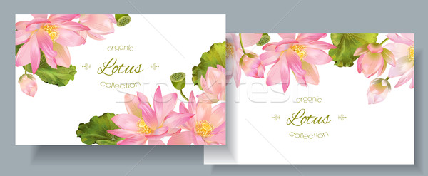 Banners vetor botânico horizontal rosa Foto stock © PurpleBird