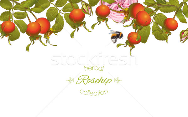 Rose hip horizontal banner Stock photo © PurpleBird