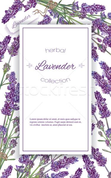 Lavender flowers banner Stock photo © PurpleBird