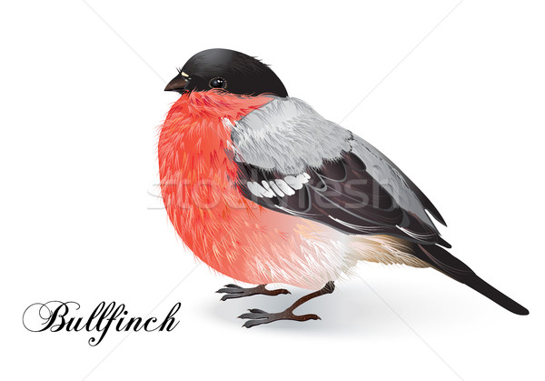Christmas bullfinch bird Stock photo © PurpleBird