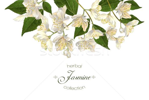 Jasmine flowers banner Stock photo © PurpleBird