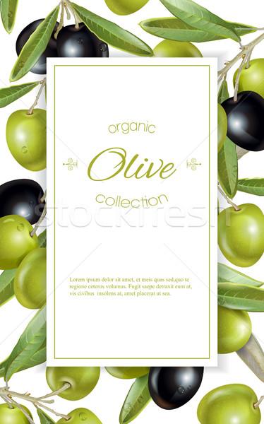 оливкового вертикальный баннер вектора зрелый черный Сток-фото © PurpleBird