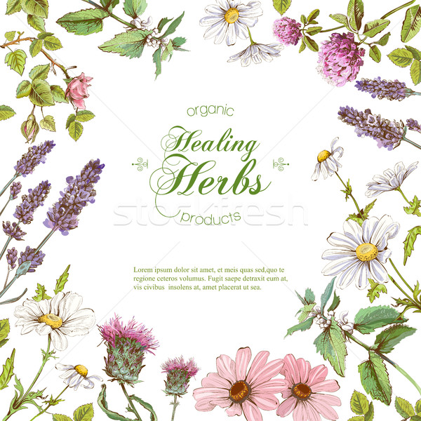 Stock photo: Vector herbal frame